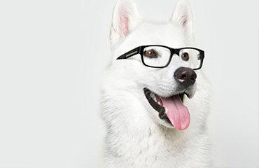 Αυτά είναι τα 9 απίστευτα πράγματα που διαισθάνονται τα σκυλιά!