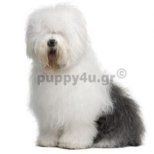 Μπομπτέιλ | puppy4u.gr