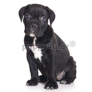 Κάνε Κόρσο | puppy4u.gr