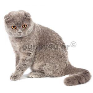 Γάτα Σιαμ | puppy4u.gr