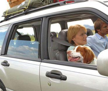 10 συμβουλές για οδικά ταξίδια με το σκύλο σας